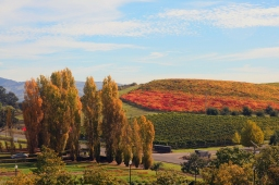 How To Visit Napa Valley On A Budget